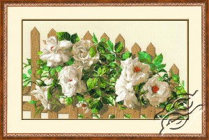 White Roses At Fence