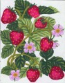 3.161The Strawberry Bush