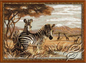 The Zebras In The Savannah