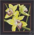 Orchids Cymbidium