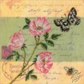 Postcard - Dog Rose
