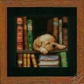 Puppy Sleeping On Bookshelf