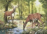 Woodland Stream - Deer