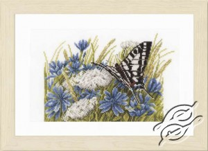 Swallowtail and Cornflowers