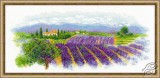 Blooming Provence