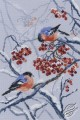 Bullfinches in Rowanberries