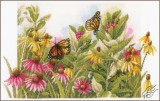 Butterflies & Coneflowers
