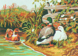 Ducks on the Pond